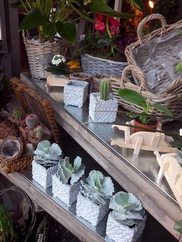 plantes grasses dans jolis pots
