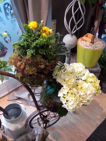 plantes en accord